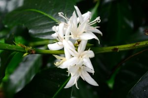 fleurcafé